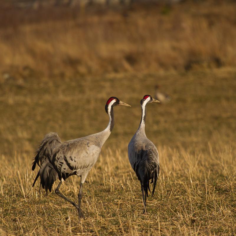 Banner Wildlife